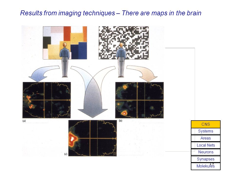Results from imaging techniques – There are maps in the brain