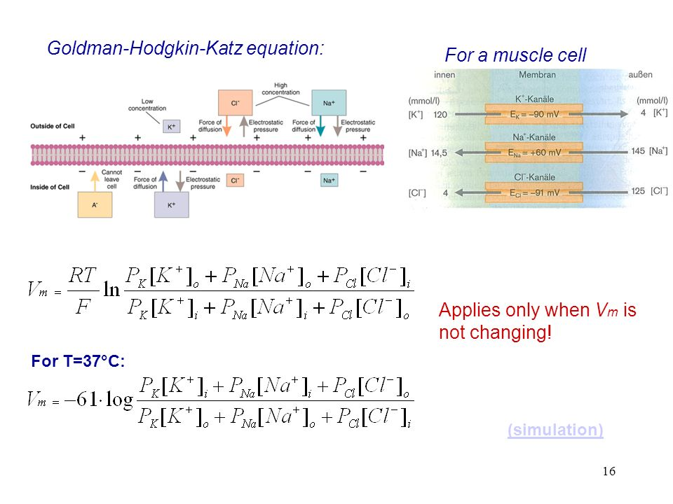 Goldman-Hodgkin-Katz equation: