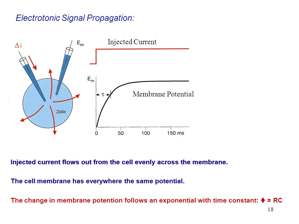 Electrotonic Signal Propagation: