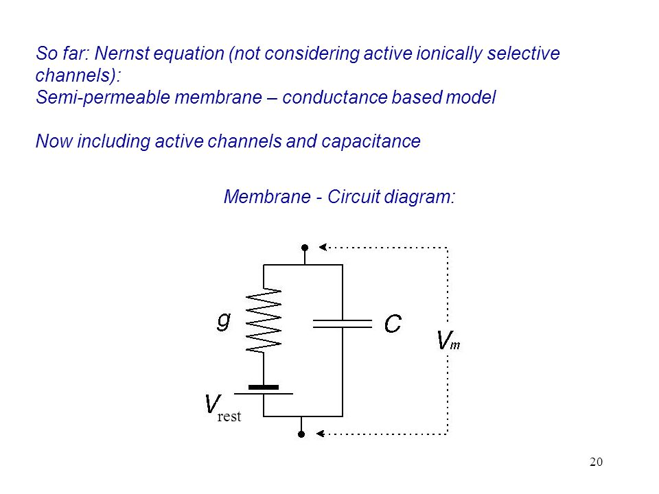 Membrane - Circuit diagram: