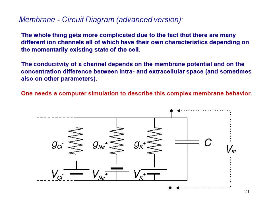 Membrane - Circuit Diagram (advanced version):