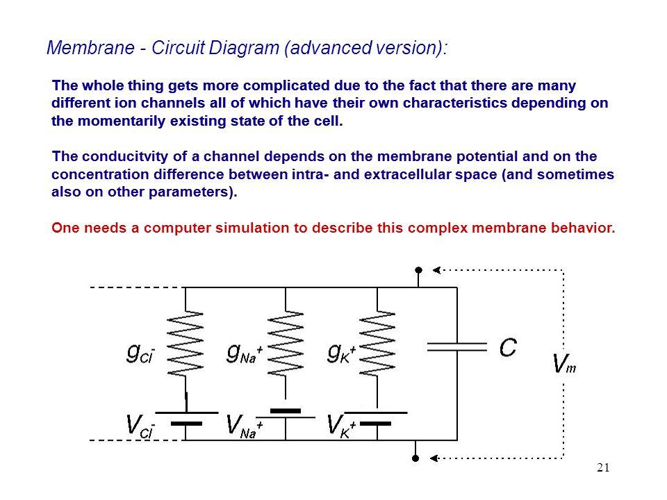 Membrane - Circuit Diagram (advanced version):