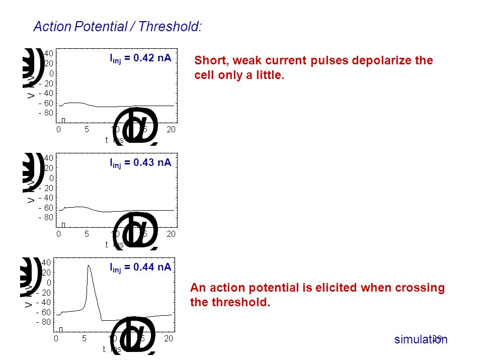Action Potential / Threshold: