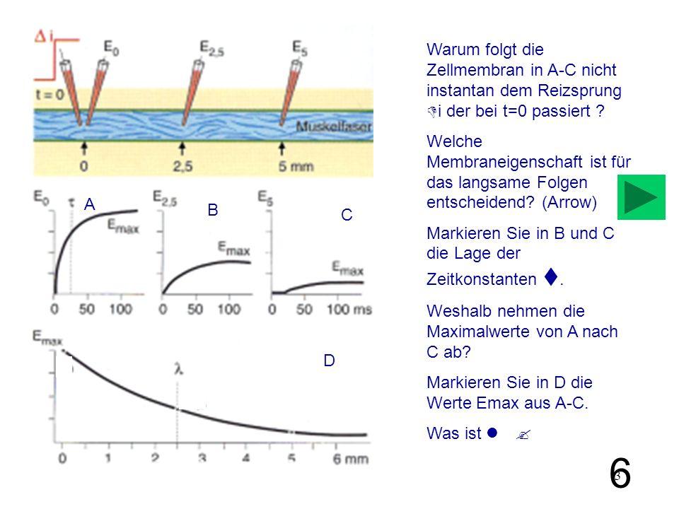 Warum folgt die Zellmembran in A-C nicht instantan dem Reizsprung Di der bei t=0 passiert