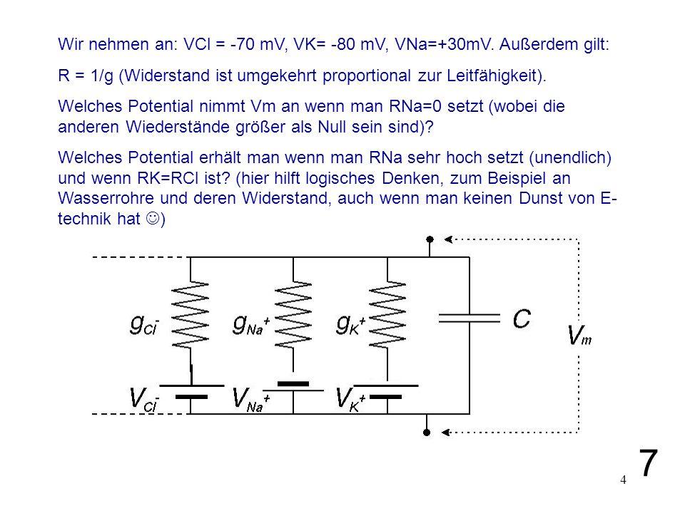 7 Wir nehmen an: VCl = -70 mV, VK= -80 mV, VNa=+30mV. Außerdem gilt: