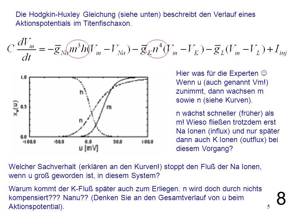 Die Hodgkin-Huxley Gleichung (siehe unten) beschreibt den Verlauf eines Aktionspotentials im Titenfischaxon.