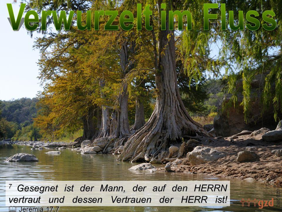 7 Gesegnet ist der Mann, der auf den HERRN vertraut und dessen Vertrauen der HERR ist.