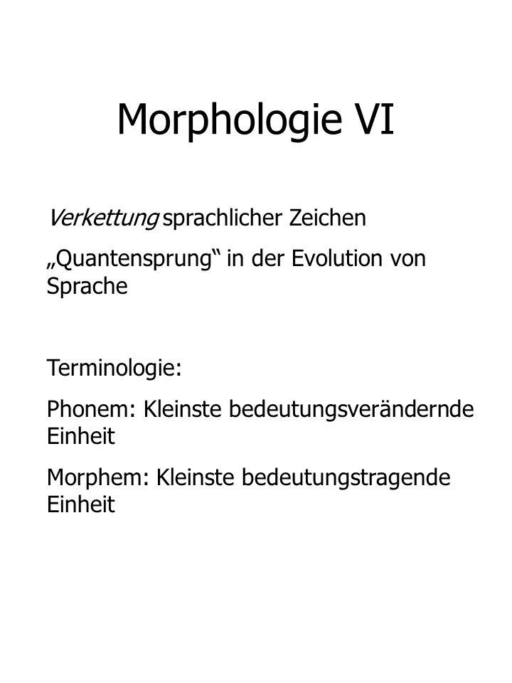 Morphologie VI Verkettung sprachlicher Zeichen