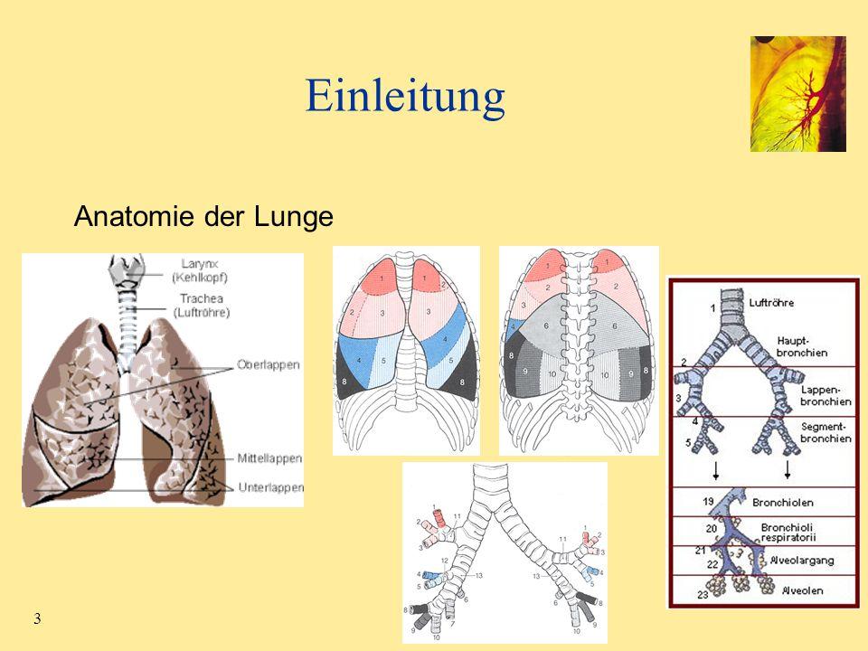 Einleitung Anatomie der Lunge