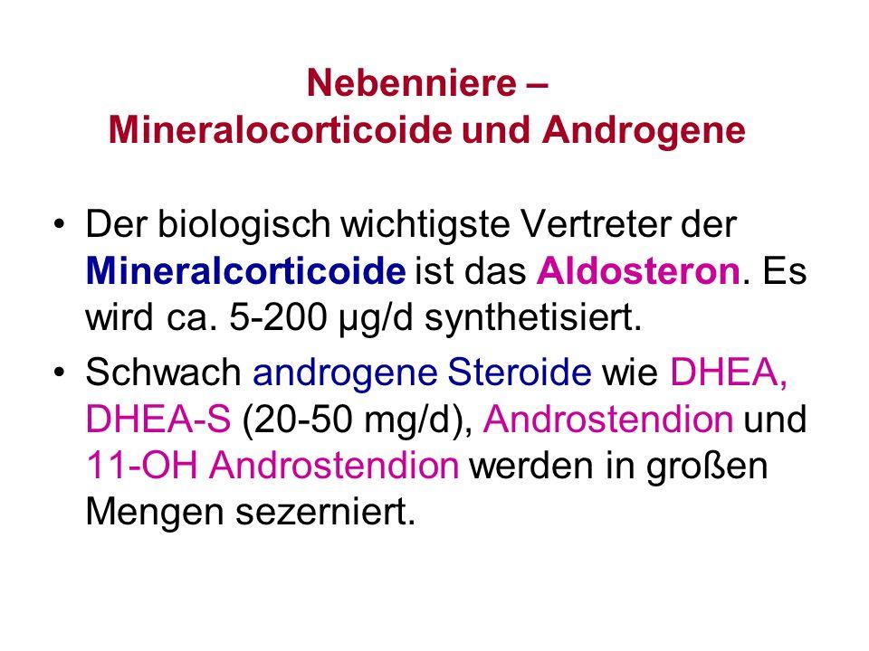 Nebenniere – Mineralocorticoide und Androgene