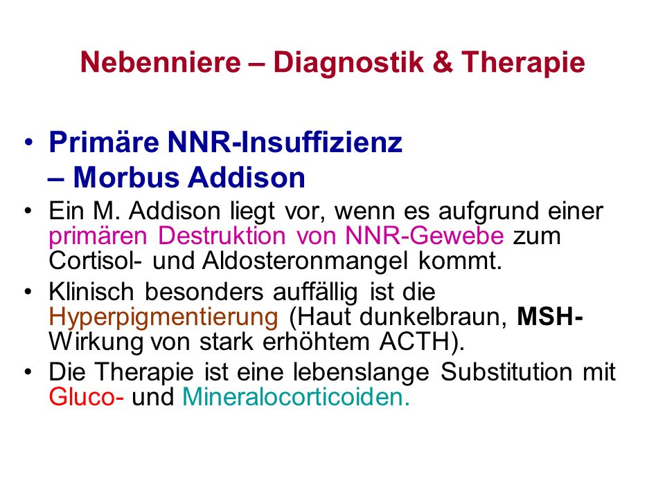 Nebenniere – Diagnostik & Therapie
