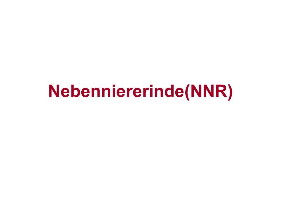 Nebenniererinde(NNR)
