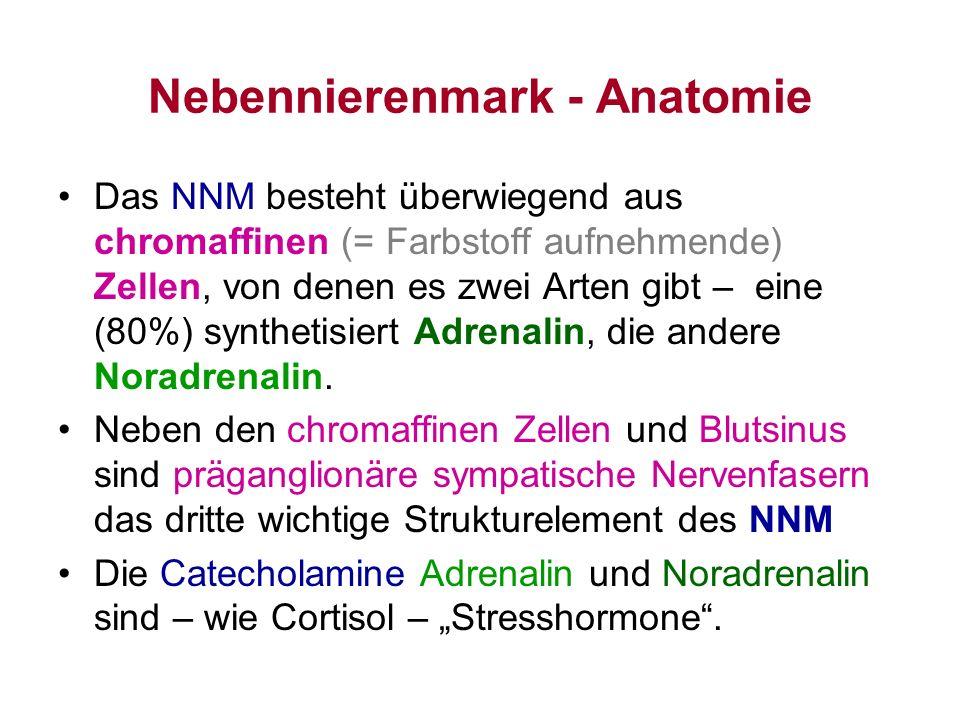 Nebennierenmark - Anatomie
