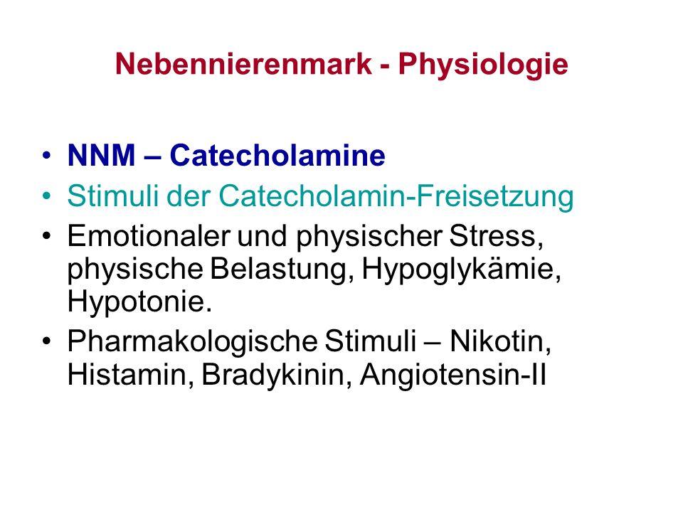 Nebennierenmark - Physiologie