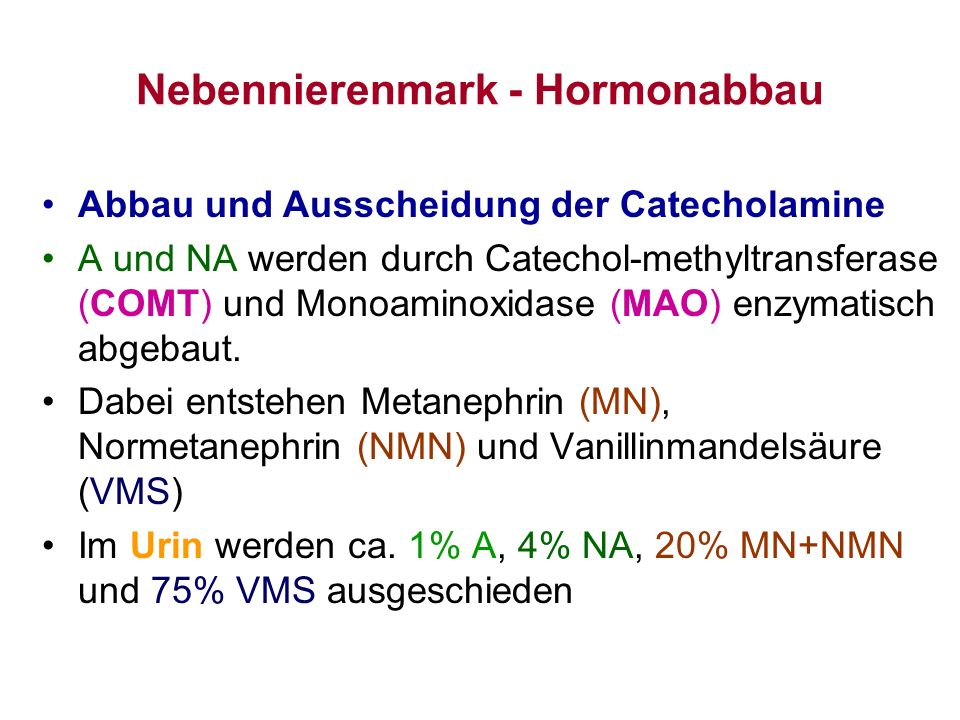 Nebennierenmark - Hormonabbau