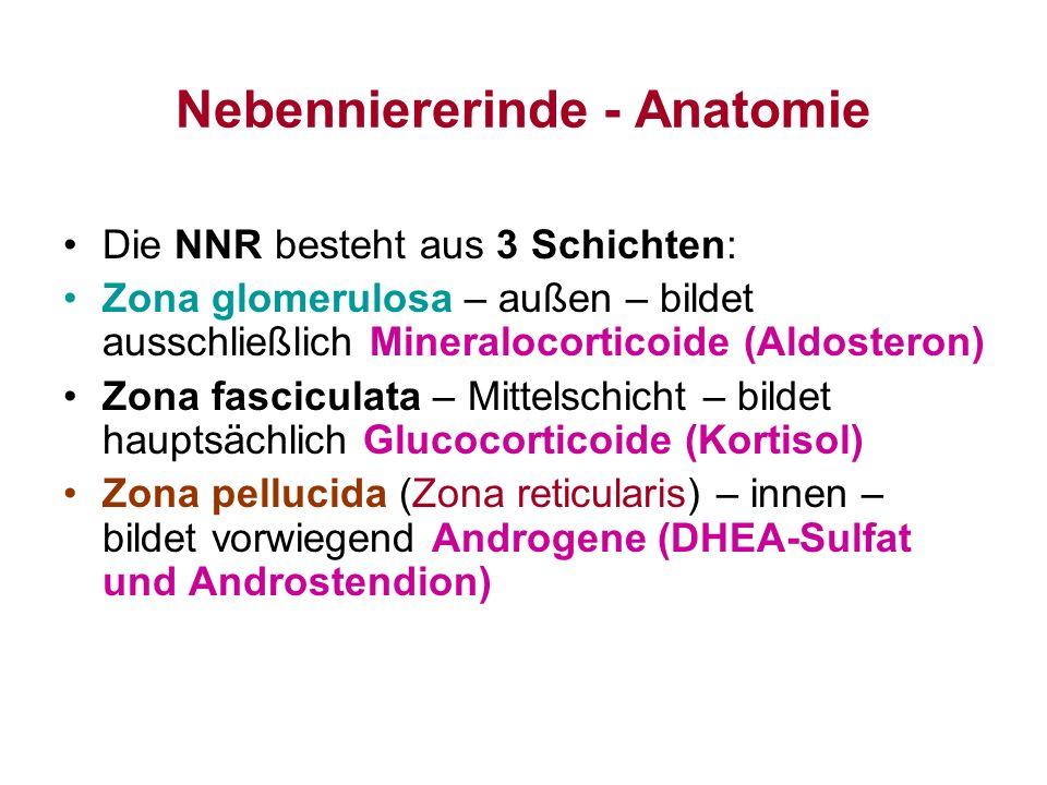 Nebenniererinde - Anatomie
