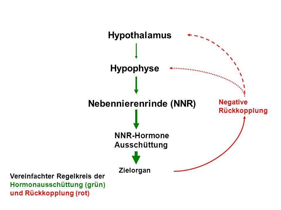Nebennierenrinde (NNR)