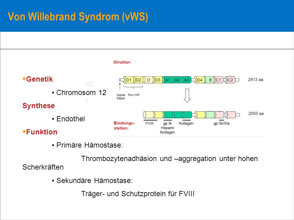 Von Willebrand Syndrom (vWS)