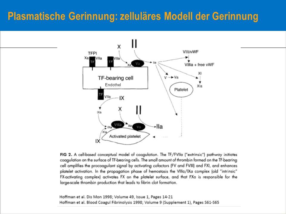 Plasmatische Gerinnung: zelluläres Modell der Gerinnung
