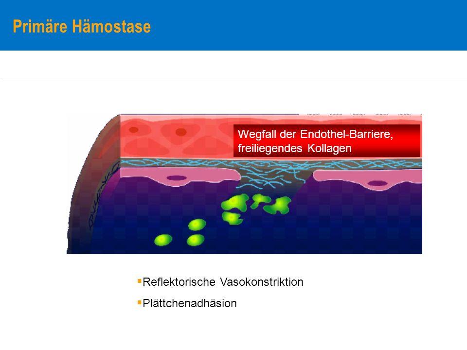Primäre Hämostase Wegfall der Endothel-Barriere, freiliegendes Kollagen. Reflektorische Vasokonstriktion.