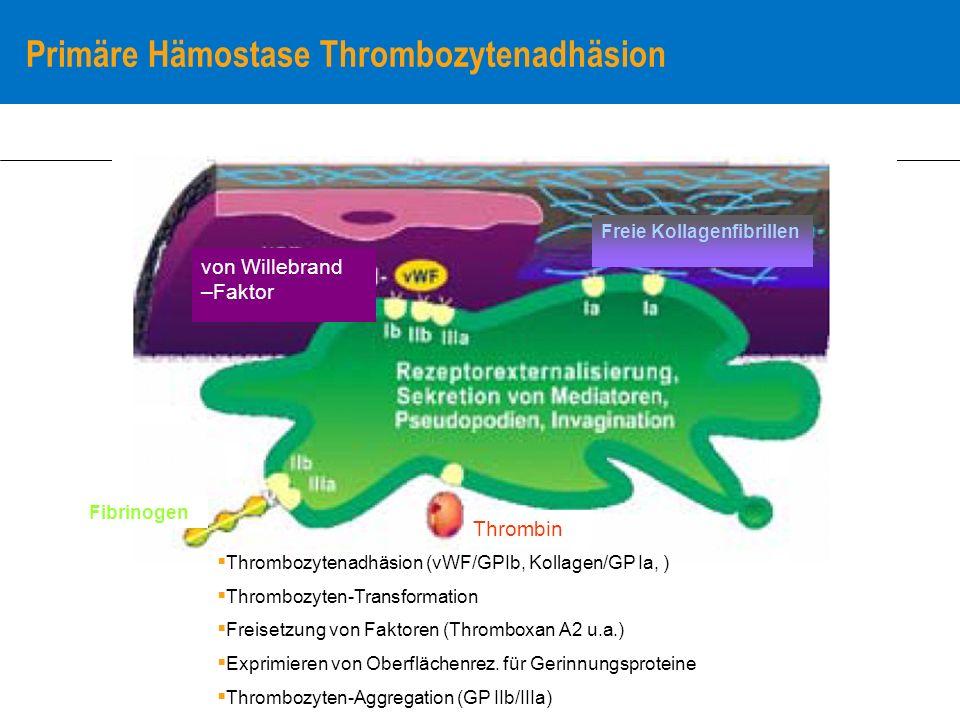 Primäre Hämostase Thrombozytenadhäsion