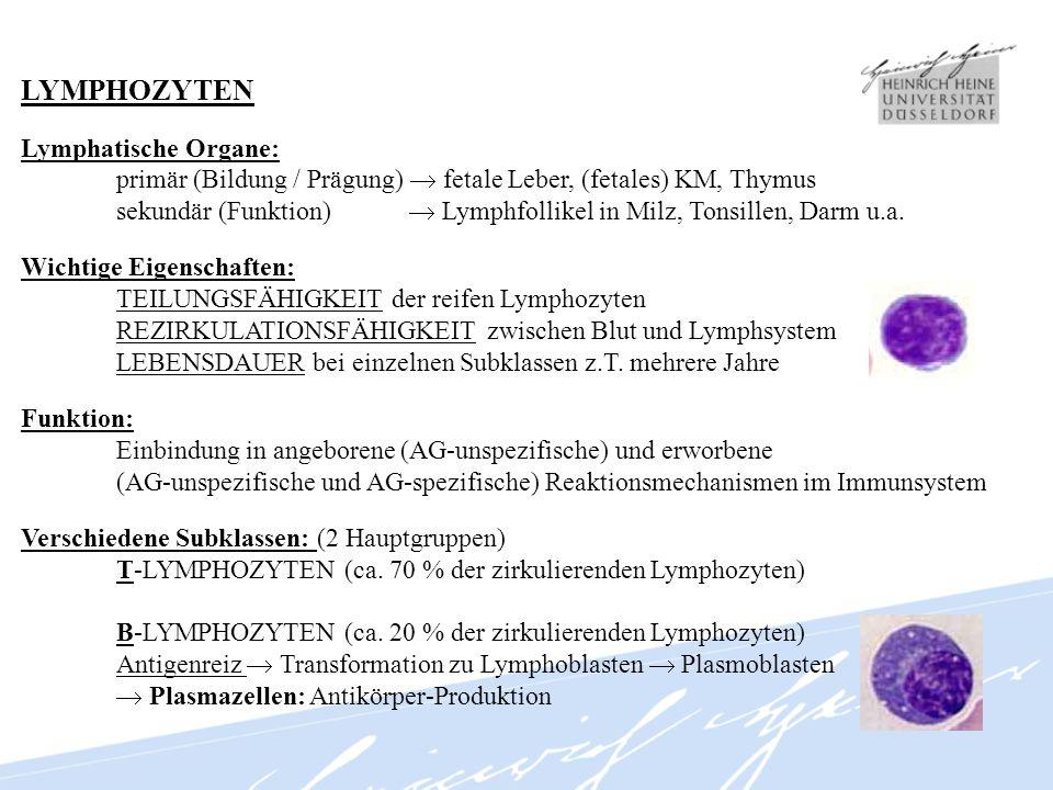 LYMPHOZYTEN Lymphatische Organe: