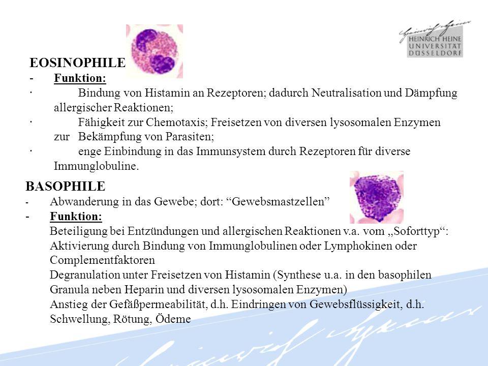 EOSINOPHILE BASOPHILE - Funktion:
