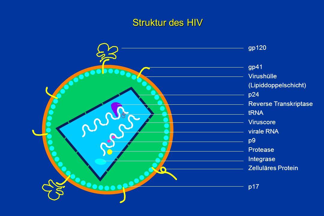Struktur des HIV z gp120 gp41 Virushülle (Lipiddoppelschicht) p24