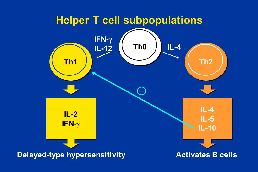 Helper T cell subpopulations