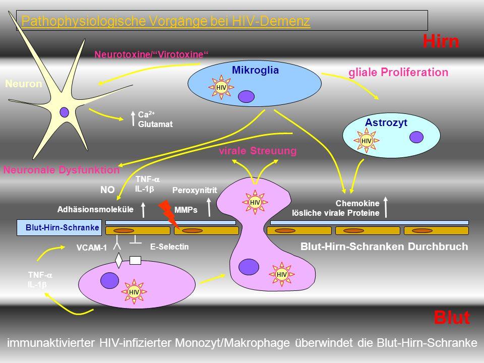 Pathophysiologische Vorgänge bei HIV-Demenz
