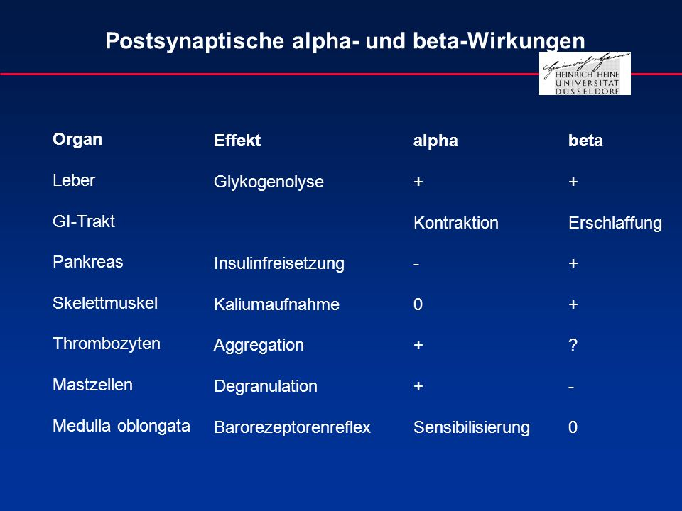 Postsynaptische alpha- und beta-Wirkungen