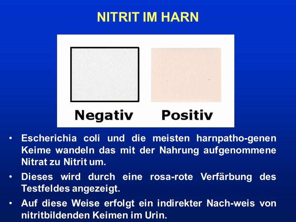 NITRIT IM HARN Escherichia coli und die meisten harnpatho-genen Keime wandeln das mit der Nahrung aufgenommene Nitrat zu Nitrit um.