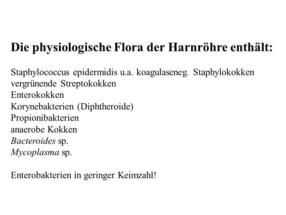 Die physiologische Flora der Harnröhre enthält: