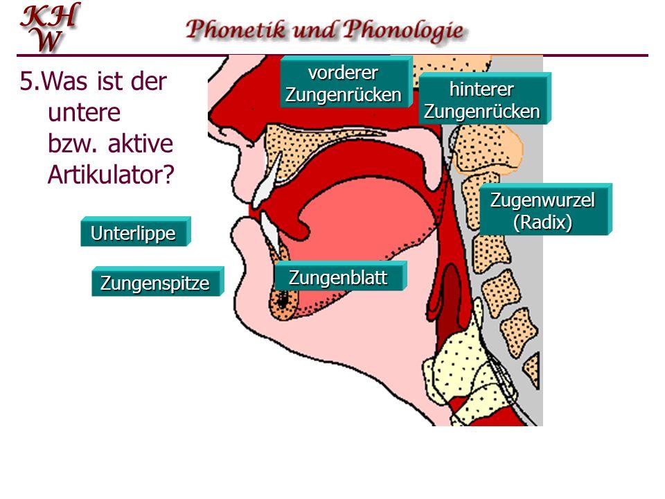 5.Was ist der untere bzw. aktive Artikulator
