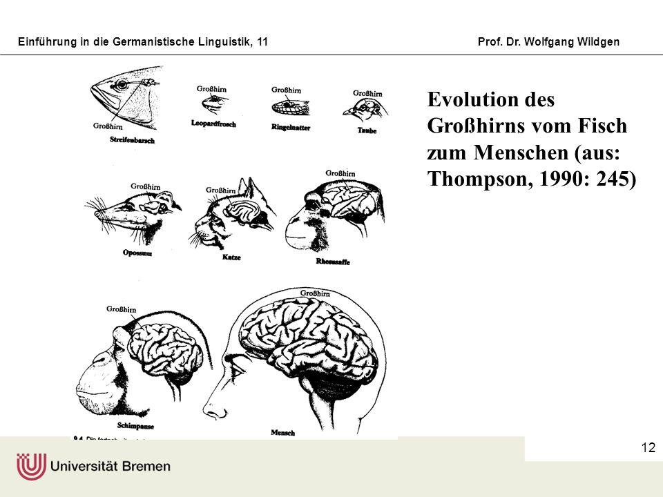 Evolution des Großhirns vom Fisch zum Menschen (aus: Thompson, 1990: 245)