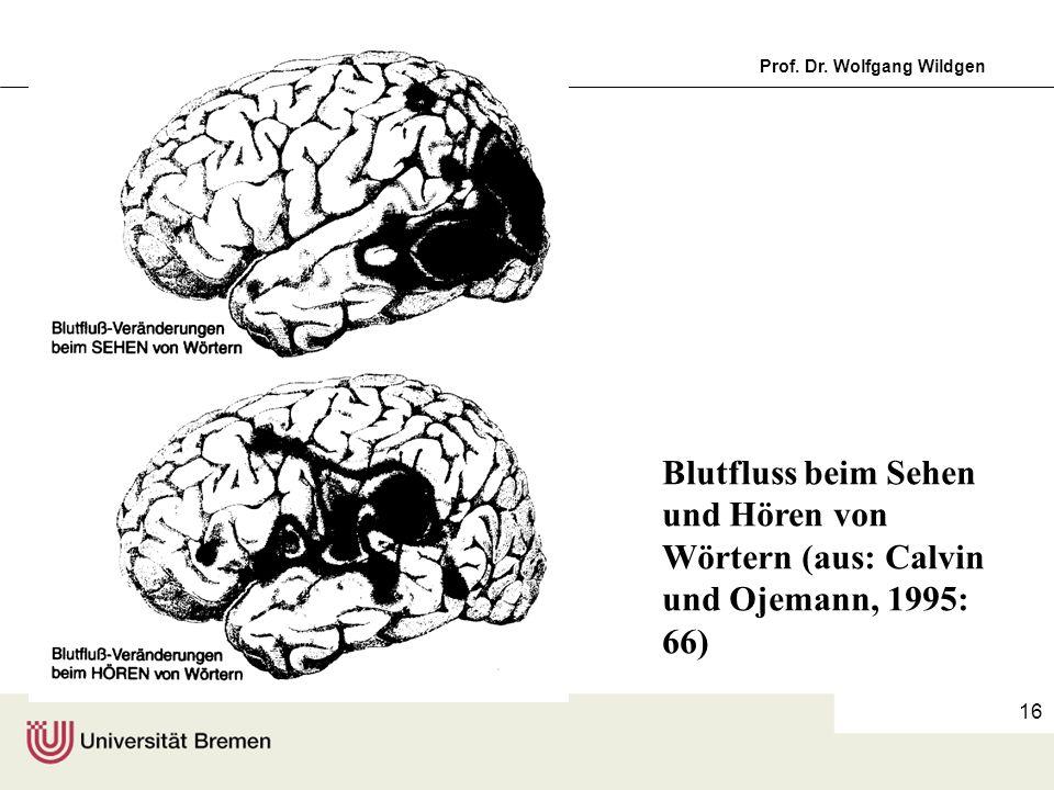 Blutfluss beim Sehen und Hören von Wörtern (aus: Calvin und Ojemann, 1995: 66)