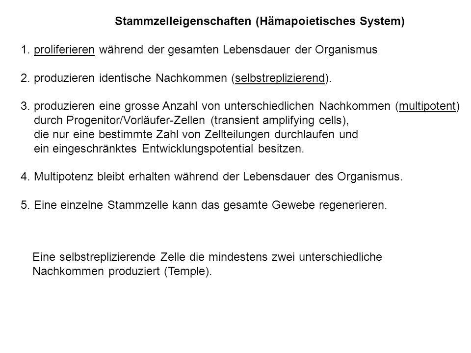 Stammzelleigenschaften (Hämapoietisches System)