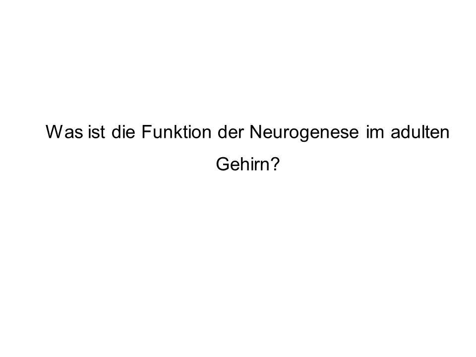 Was ist die Funktion der Neurogenese im adulten Gehirn