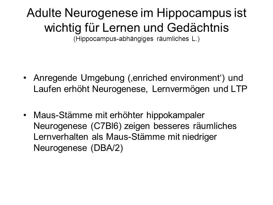 Adulte Neurogenese im Hippocampus ist wichtig für Lernen und Gedächtnis (Hippocampus-abhängiges räumliches L.)