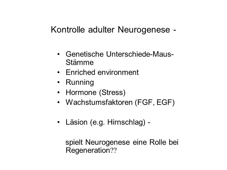 Kontrolle adulter Neurogenese -
