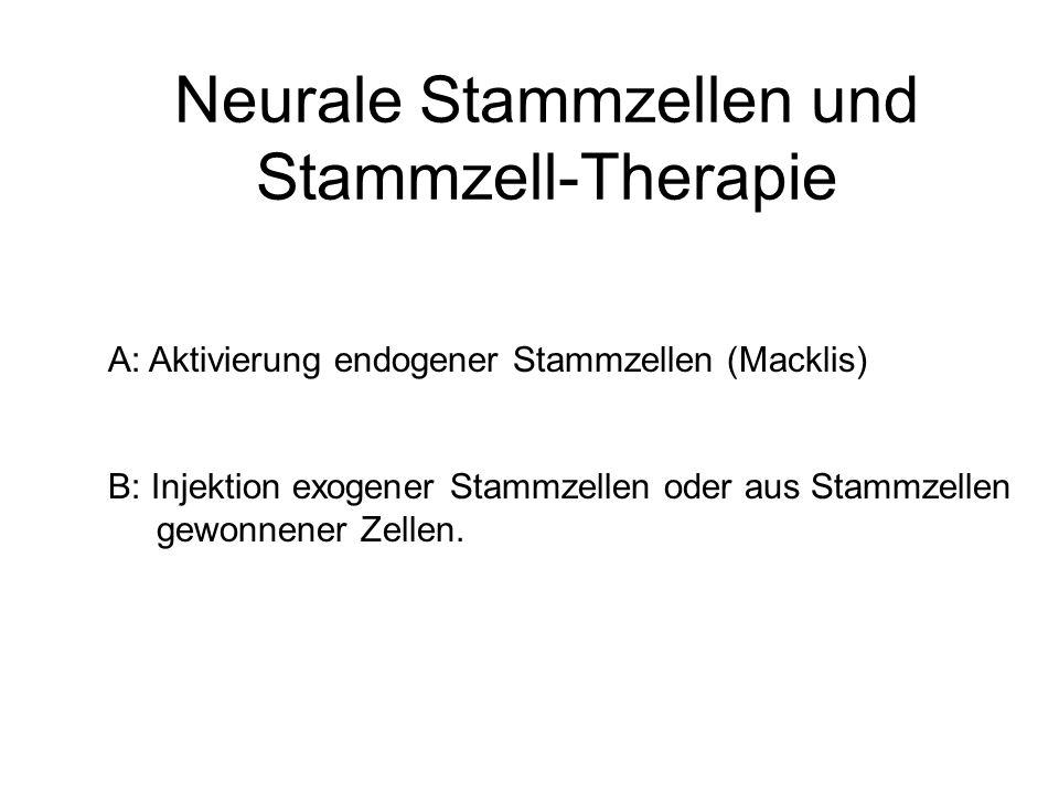 Neurale Stammzellen und Stammzell-Therapie