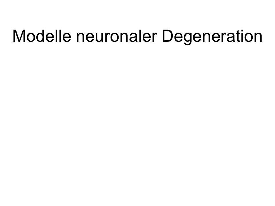 Modelle neuronaler Degeneration