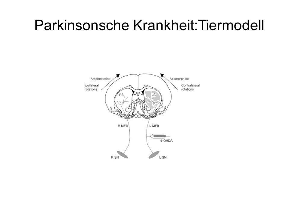 Parkinsonsche Krankheit:Tiermodell