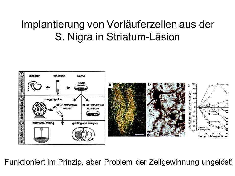 Implantierung von Vorläuferzellen aus der S. Nigra in Striatum-Läsion