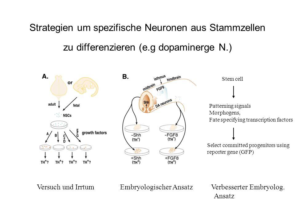 Strategien um spezifische Neuronen aus Stammzellen zu differenzieren (e.g dopaminerge N.)