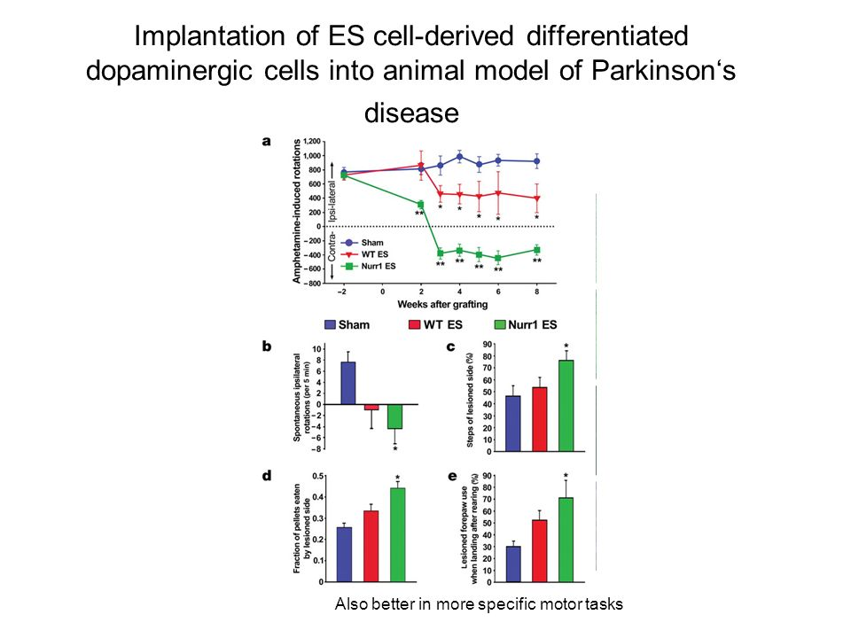 Implantation of ES cell-derived differentiated dopaminergic cells into animal model of Parkinson's disease