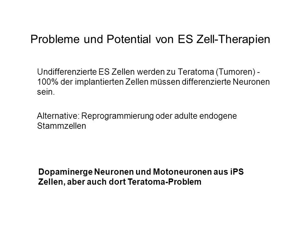 Probleme und Potential von ES Zell-Therapien