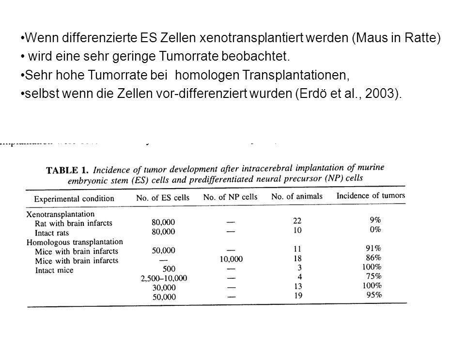 Wenn differenzierte ES Zellen xenotransplantiert werden (Maus in Ratte)