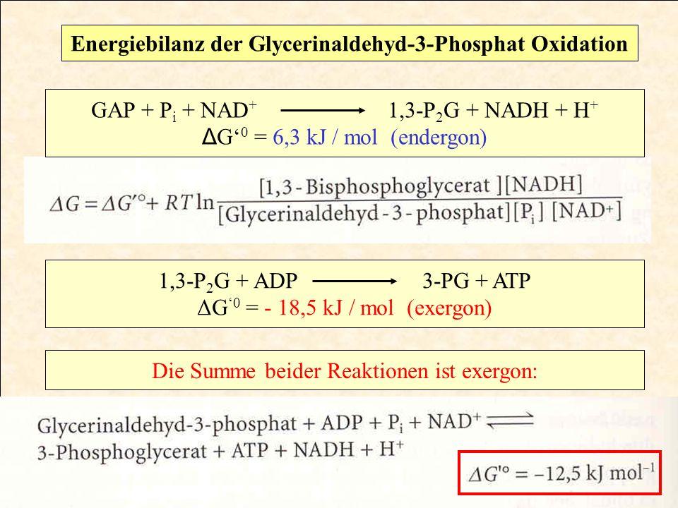 Energiebilanz der Glycerinaldehyd-3-Phosphat Oxidation