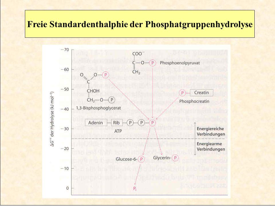 Freie Standardenthalphie der Phosphatgruppenhydrolyse